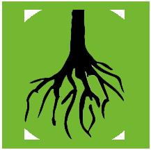На гол корен