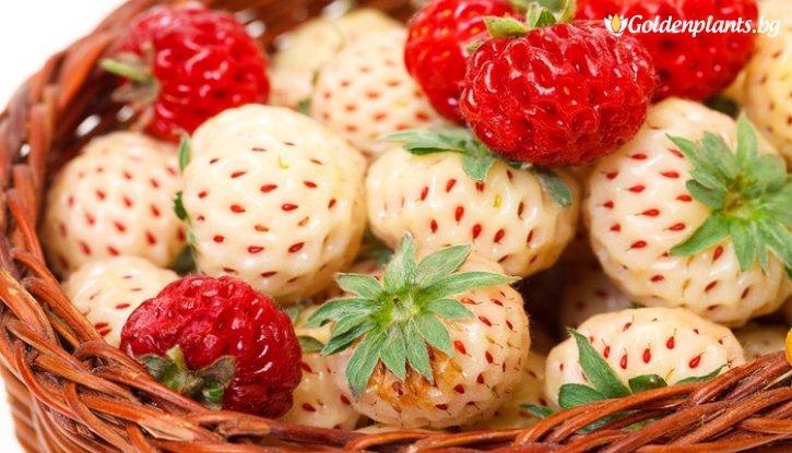 Снимка Бяла Ягода White Pineberry