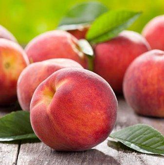 Праскова сорт Хале / Peach Hale /