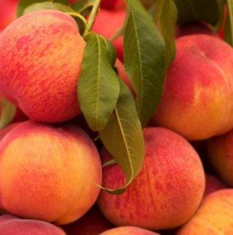 Праскова сорт Глоухейвън /Peach Glow Heaven/