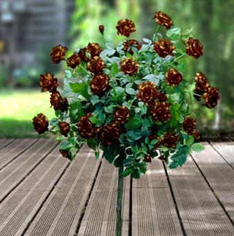 Фокус щамбова роза - Дърво 110 - 140 см.