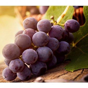 Лоза Русалка 3 - безсеменен сорт грозде - ранно зреещ в контейнер..
