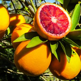 Червен портокал / Blood orange /