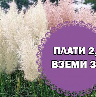 Промоционален пакет Кортадерия, Пампаска трева микс - Плати 2, вземи 3!..