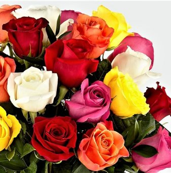 Рози Смесица / Roses Mixed /