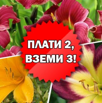 Промоционален пакет Хемерокалис - Плати 2, вземи 3!..