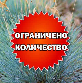 Промоционален пакет Фестука, синя трева - Плати 2, вземи 3!...