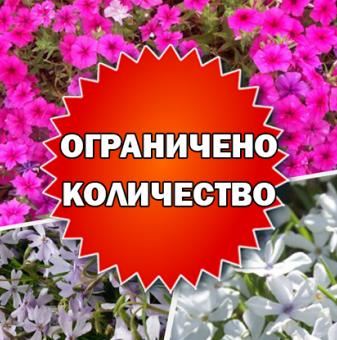 Промоционален пакет АЛПИЙСКИ ФЛОКС - Плати 2, вземи 3!...