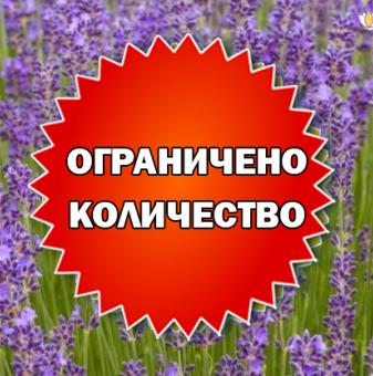 Промоционален пакет Лавандула Мунстийт - Плати 2, вземи 3!..
