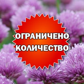 Промоционален пакет Сибирски лук - Плати 2, вземи 3!..