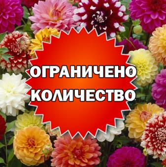 Промоционален пакет Далия Смесица - Плати 2, вземи 3!..