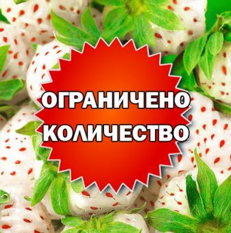 Промоционален пакет Розова Ягода - Плати 2, вземи 3!..