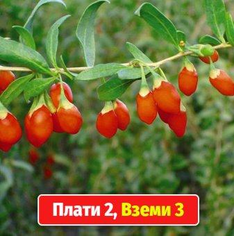 Промоционален пакет Годжи Бери / Lycium barbarum /- Плати 2, вземи 3!...